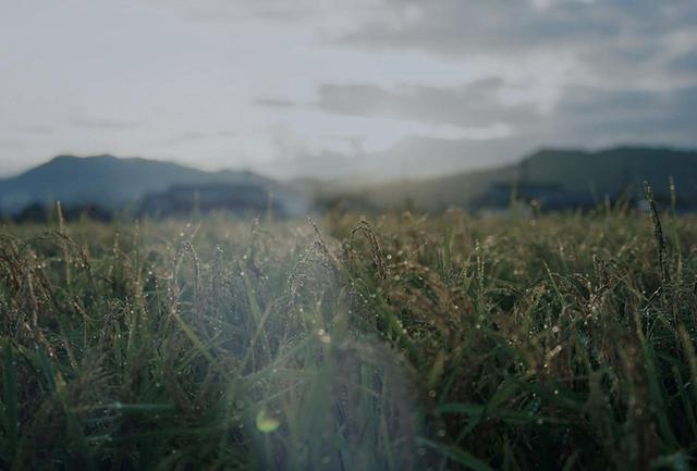画像: 高品質の酒米を生産農家に契約栽培してもらっている福光屋は、土作りから農家とともに研究し、より高品質の酒米を安定確保。毎年の気候状況によって変化する米の性質を予測し、酒造りにその情報を生かしている