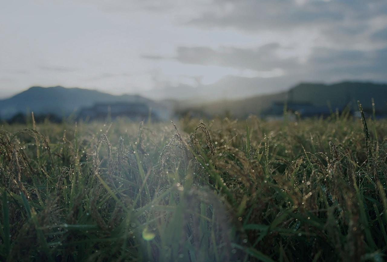 Images : 2番目の画像 - 「祈りを込めて育てた米と 百年の時をかけた霊峰の水で醸す 有機純米酒「禱と稔」」のアルバム - T JAPAN:The New York Times Style Magazine 公式サイト