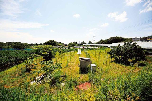 画像: 津高地区の数カ所に2ヘクタールほどの自家畑を持つ