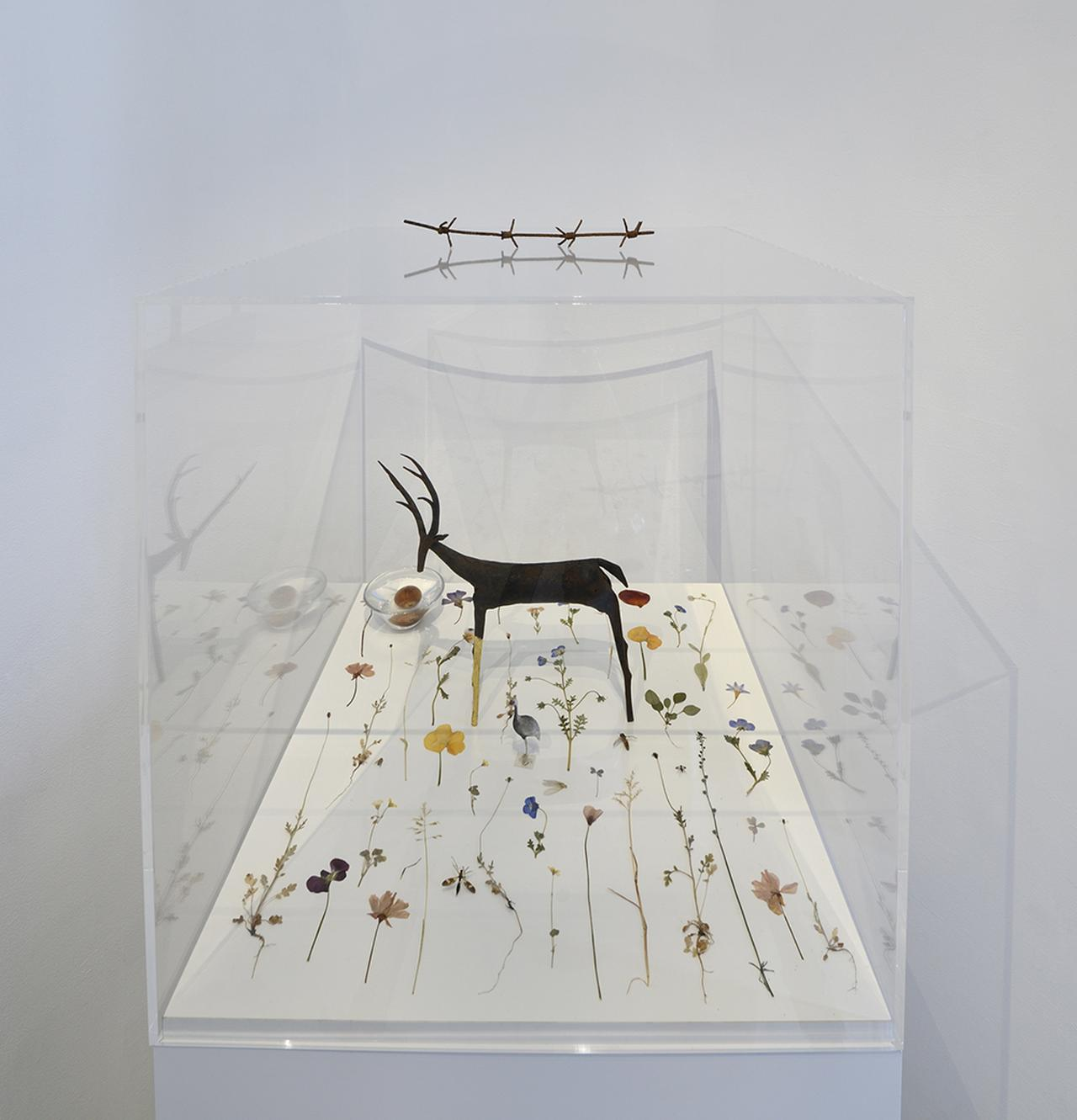 Images : 『The Nature Rules 自然国家:Dreaming of Earth Project』 原美術館