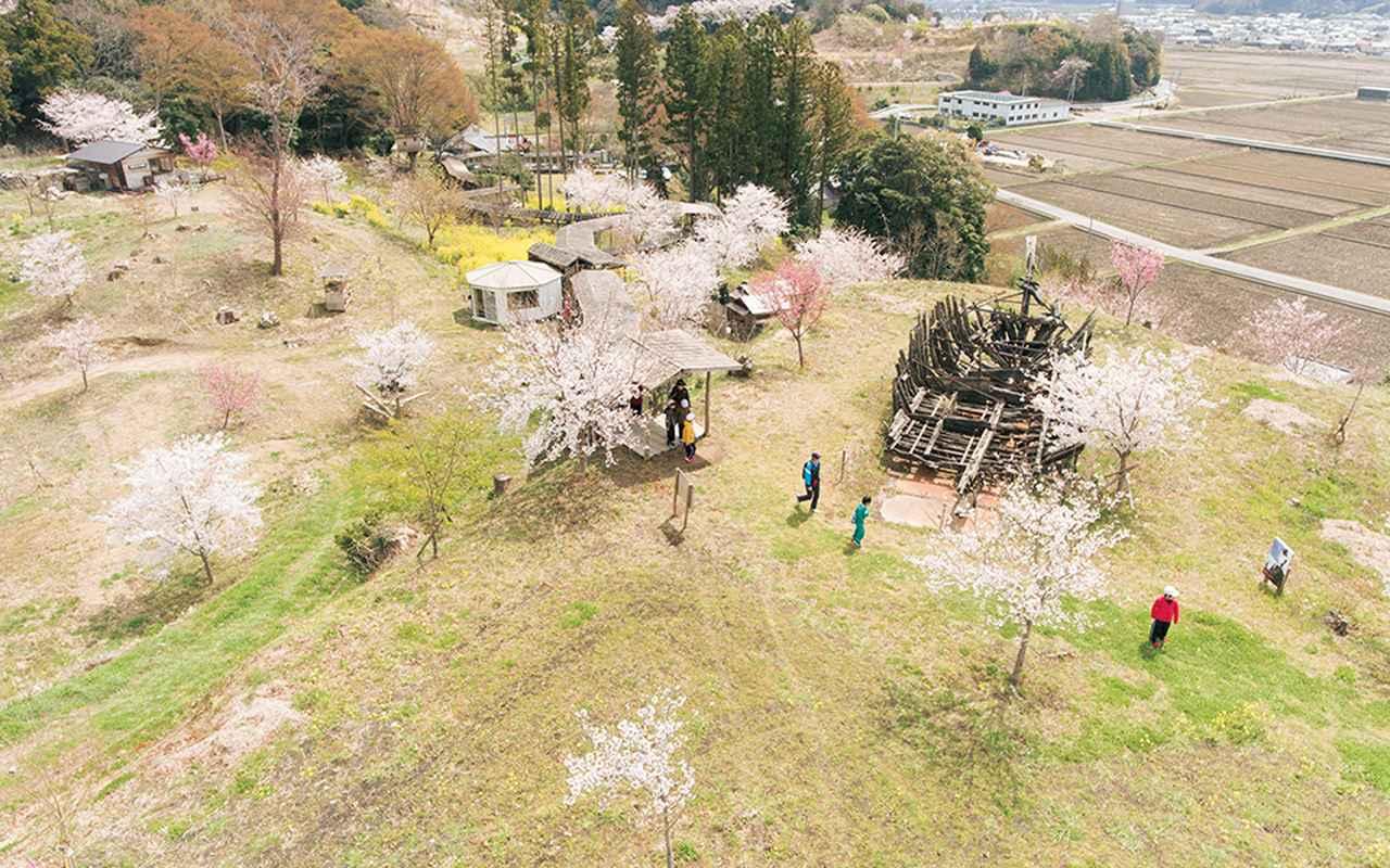 Images : 1番目の画像 - 「9万9,000本の桜をふるさとに。 アートと桜によるおだやかな反乱 「いわき万本桜プロジェクト」」のアルバム - T JAPAN:The New York Times Style Magazine 公式サイト