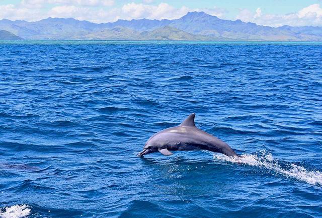 画像: 南太平洋の青い海と緑の島、イルカたちにとっても楽園だ