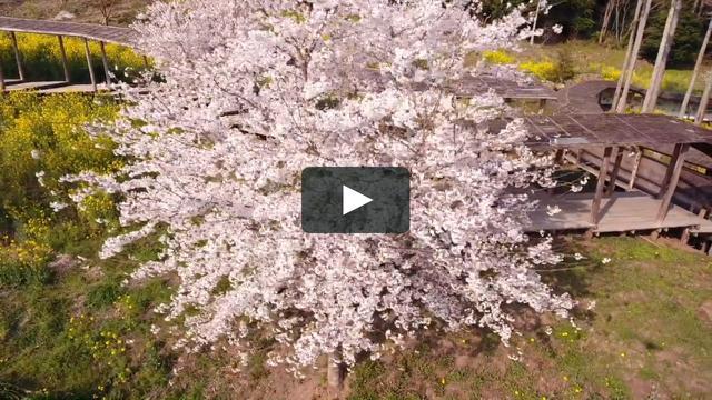 画像: 空から見た「いわき回廊美術館」。震災後に現代美術家の蔡國強がデザインし、ボランティア400人の力でつくった回廊が山に向かって延びる。高台からは遠くまで広がる水田が見渡せ、四季折々の風景が美しい FILMED BY MAKOTO NAWA vimeo.com