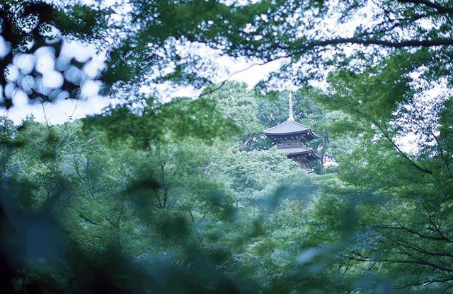 画像: 庭園のシンボルである三重塔。大正14年、山縣有朋の後に主となった藤田平太郎が、広島県の竹林寺にあった壊れかけた塔を譲り受け、この地に移築・修理。建築時期は不明だが、室町時代初期の部材が使われている美しい建築 PHOTOGRAPHS: COURTESY OF HOTEL CHINZANSO TOKYO