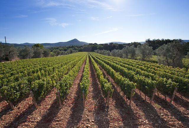 画像: アレグリーニは2001年からトスカーナのボルゲリに新たなワイナリー「ポッジョ・アル・テゾーロ」を設立。ヴェルメンティーノ種の栽培にも力を入れ、「ソロソーレ」といった新しい白ワインを生み出し、成功を収めている。「ボルゲリのテロワールを生かしながらも、繊細な味わいのワインをつくりたいと思っています」とマリリーザさんは意欲を見せる COURTESY OF ALLEGRINI