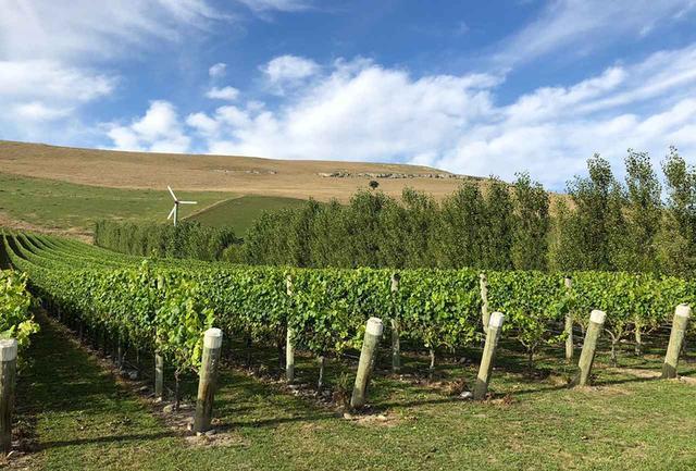 画像: ワイタキ・ヴァレーの「クロ・オスラー」畑。土壌からは太古のアンモナイトが多く出土する。厳しい土地だが、秀逸なブドウを育む COURTESY OF OSTLER VINEYARDS