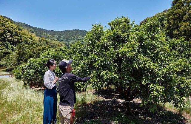 画像: アサヒ農園の田所一成さん(右)と、樋口宏江シェフ。まだ小さな果実の「はるみ」の木の前で。「はるみ」は清美とポンカンの交配種