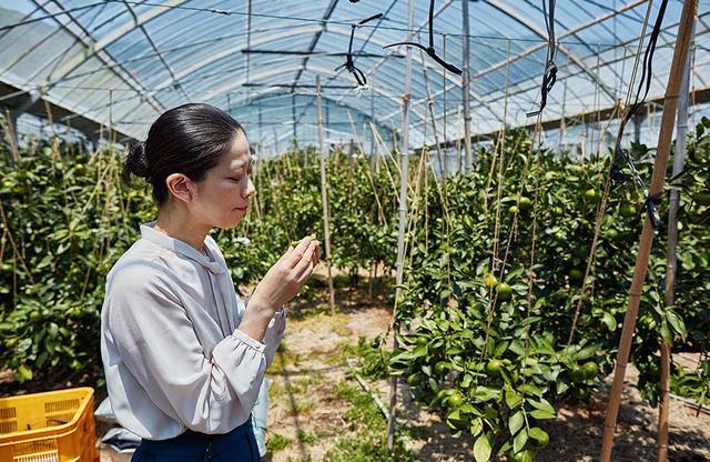 画像: まだ青い温州みかんを味わう樋口シェフ。新たな料理の構想につながっているのかもしれない