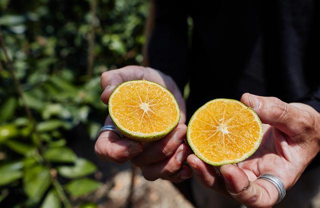 画像: まだ熟していないとはいえ、オレンジかかった果肉から高級感が漂う