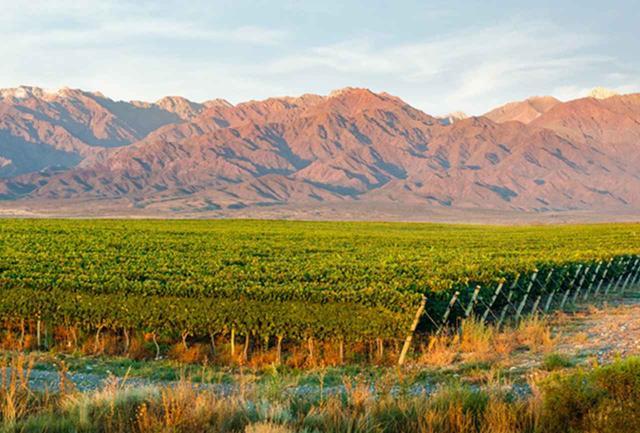 画像: ワイナリーの位置するメンドーサはアルゼンチン西部の標高800mの高原地帯にあり、遠くには南米最高峰の山であるアコンカグアを望む。地中海気候でブドウ栽培に適し、ここでアルゼンチンの70%のワインが生まれるという COURTESY OF VIÑA COBOS