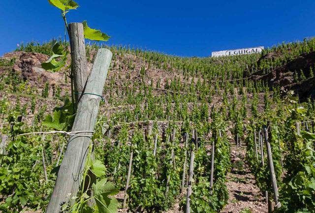 画像: 初代のエチエンヌ氏がほれ込んだのが「ラ・ムーリーヌ」の畑。南向きで、ブドウにとって最高の日照条件。熟成のポテンシャルが高いブドウができるという COURTESY OF GUIGAL