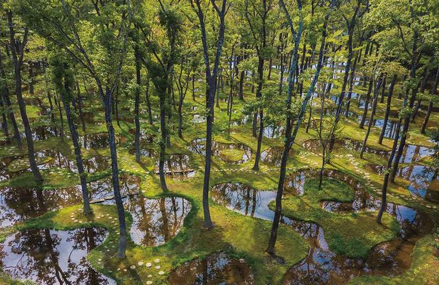 画像: 2018年に、那須にオープンしたボタニカルガーデン アートビオトープ《水庭》。隣接する土地にホテルを建設するのに伴い、そこにあった約400本の木を、160個の人工池をつくった庭に移植。土地にある自然の要素を組み替え、新たな自然環境を創出する試みだ COURTESY OF NIKISSIMO INC.
