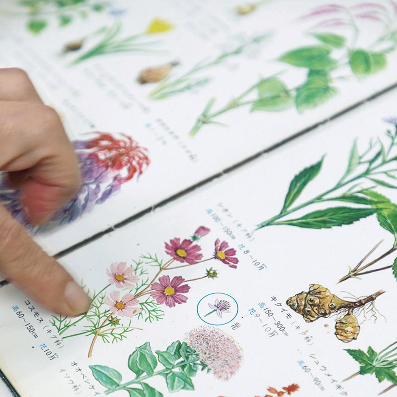 Images : 10番目の画像 - 「パーラー ローレルの 熟練職人が紡ぎだす 花のケーキの物語」のアルバム - T JAPAN:The New York Times Style Magazine 公式サイト