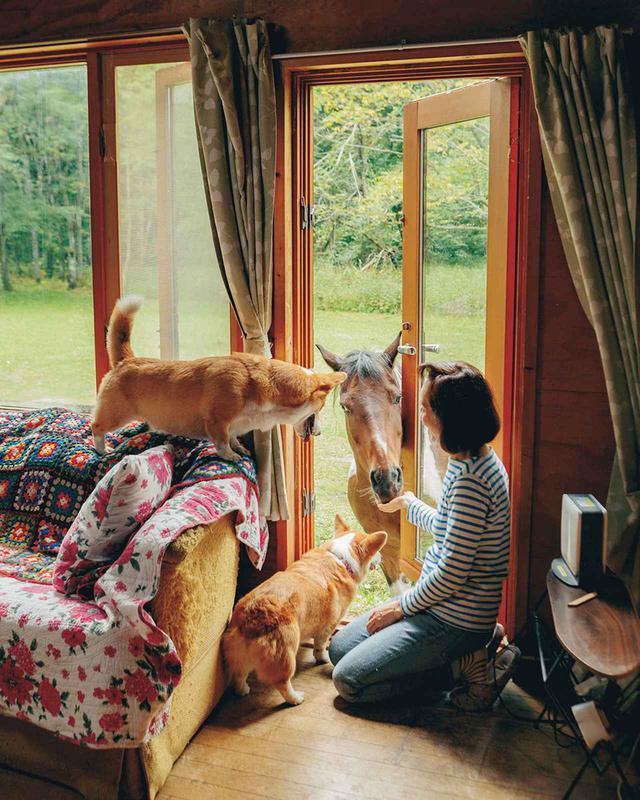 画像: 窓から馬がのぞく。家と牧地との間に柵がないので、まさに一緒に住める空間。こんな場所はそうはない