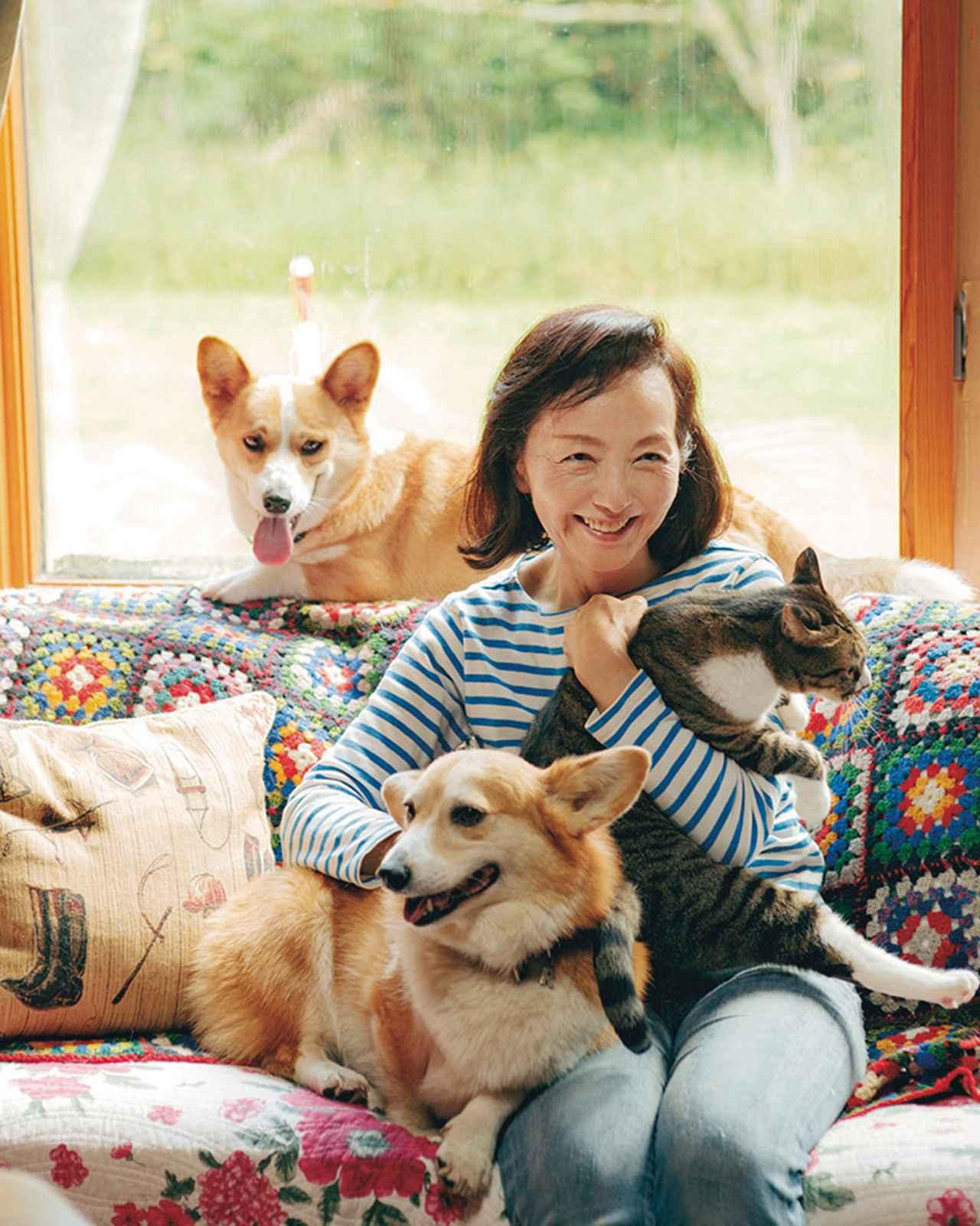 画像: 森の家のリビングにて。コーギーのれい、五郎丸、猫のゴーシュとともに。れいは馬とともに育ち、馬たちからしつけられた