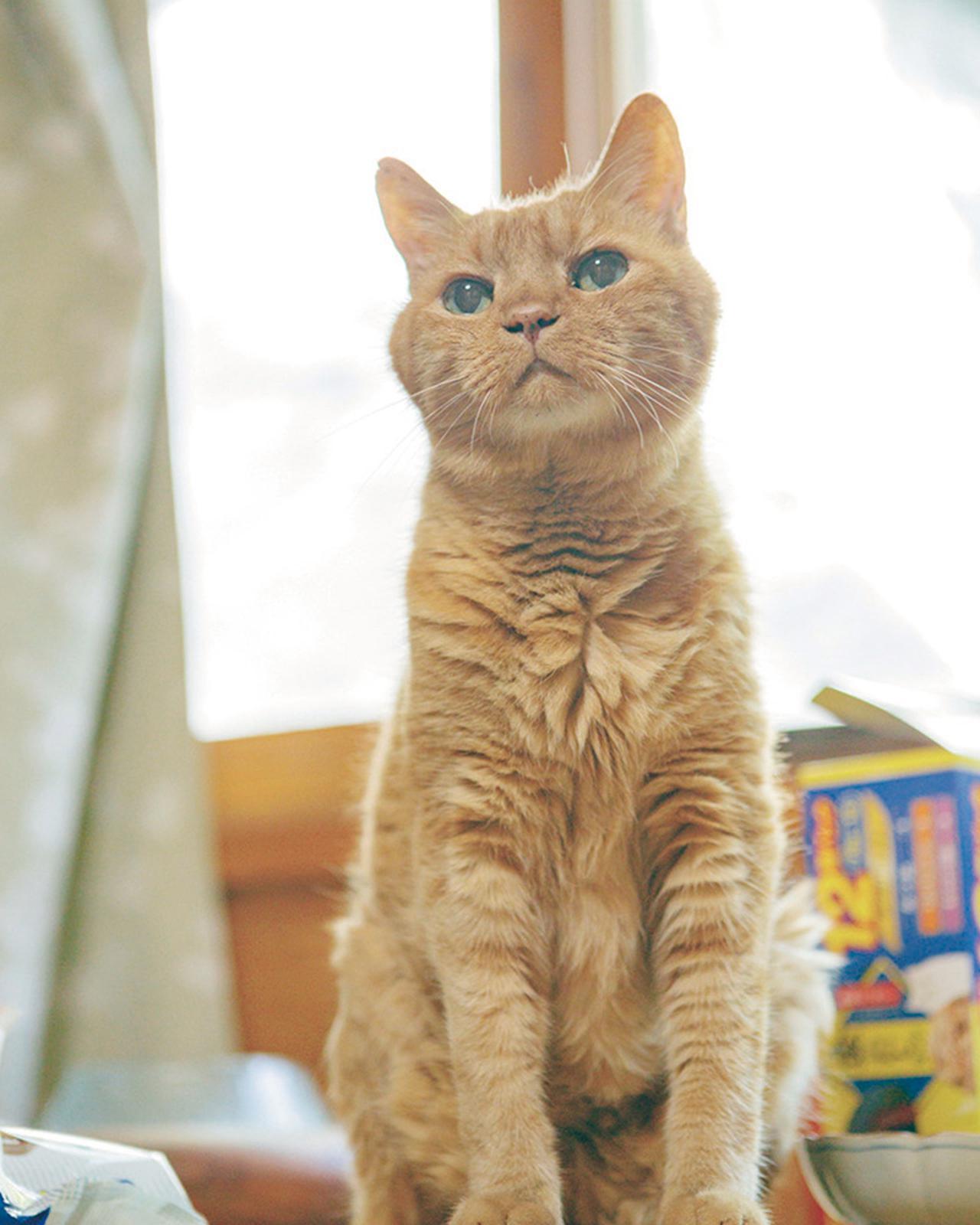 画像: 動物では最古参の猫、連太郎。御年23歳。「猫を超えた存在になっている」と言われる。猫はほかにフォスとメイの計4匹。メイは捨て猫が産んだ子猫で、ほかの子は捨て猫を引き取った