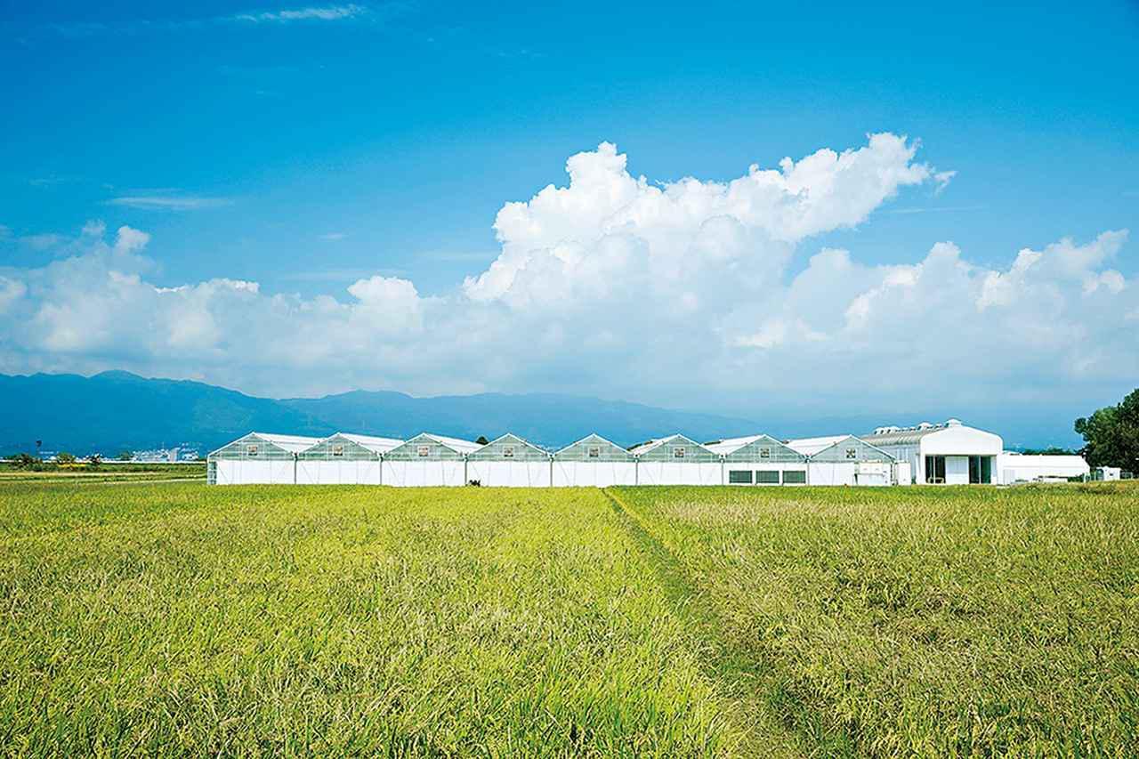 画像: 琵琶湖畔の農業地帯にある「Rose Farm KEIJI」。約5,000m²の温室と実験室を備えたオフィスは対岸に比叡山を望む