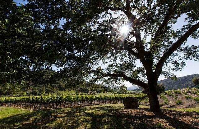 """画像: カリストガにある美しいブドウ畑。""""奇跡の味""""はここから生まれる"""