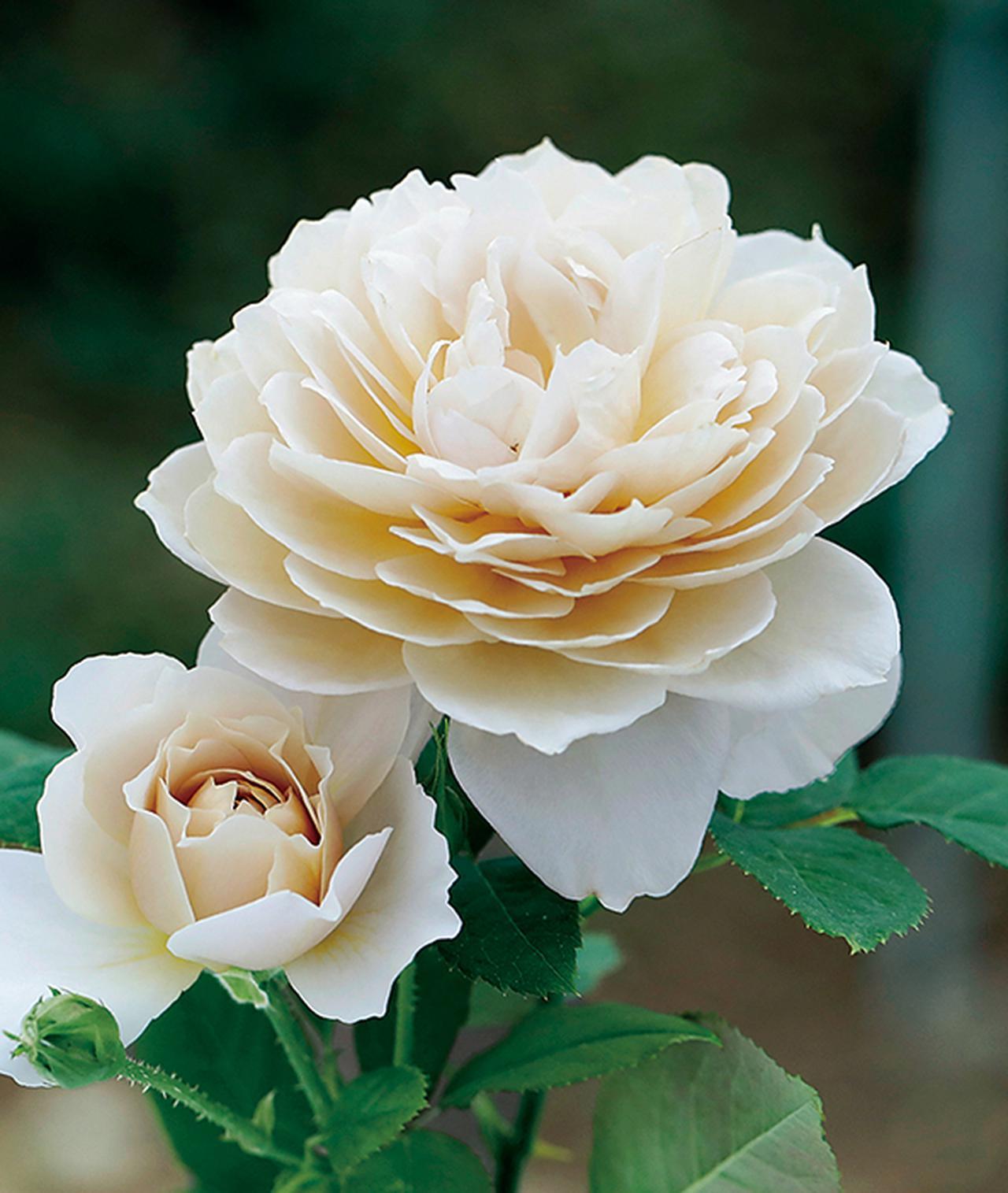 Images : 6番目の画像 - 「Rose Farm KEIJIが 生み出す唯一無二の「和ばら」。 その名前にこめられた想いを紐とく」のアルバム - T JAPAN:The New York Times Style Magazine 公式サイト