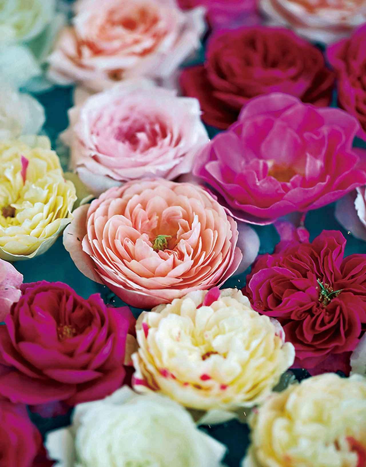 Images : 14番目の画像 - 「Rose Farm KEIJIが 生み出す唯一無二の「和ばら」。 その名前にこめられた想いを紐とく」のアルバム - T JAPAN:The New York Times Style Magazine 公式サイト