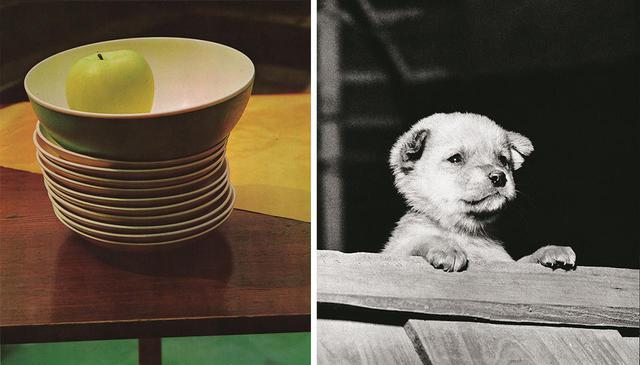 画像: (写真左)《静物 机、皿、りんご》 1961年 写真集『遠近』より オフセット印刷 (写真右)《仔犬》 1958年 写真集『遠近』より グラビア印刷 PHOTOGRAPHS: COURTESY OF TOKYO PHOTOGRAPHIC ART MUSEUM