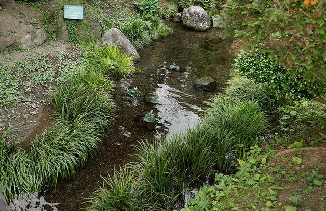 画像: 熊本の「スイゼンジノリ」。先般の自然災害による水質汚染の影響で絶滅危惧種として指定されている