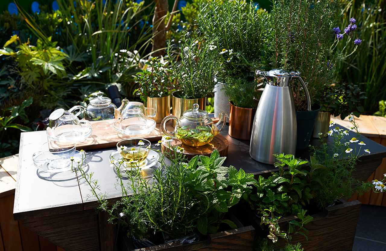 Images : 6番目の画像 - 「マインドフィットネスは食から―― 週末のランチをゆったりと過ごす レストラン「ARBOR」」のアルバム - T JAPAN:The New York Times Style Magazine 公式サイト