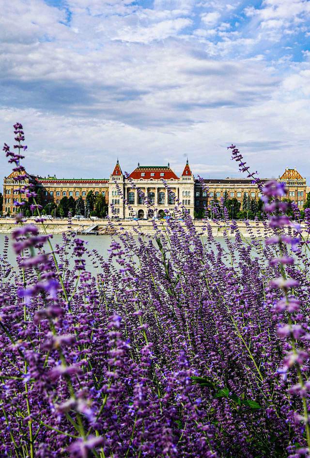 画像: 春の色に溢れたブダペスト。ドナウ川を歩いていると、向こう側に「ブダペスト工科経済大学」が見えた