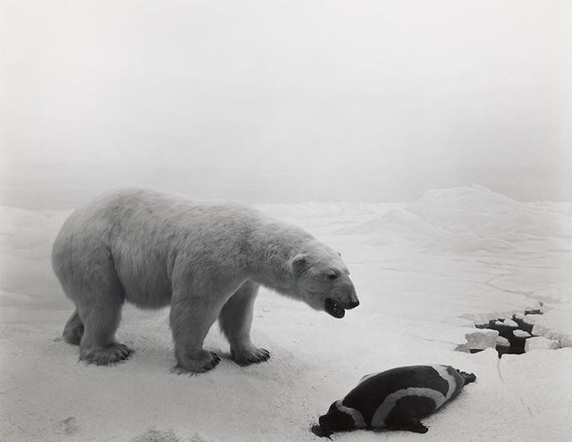 画像: 杉本博司の最初の写真作品シリーズ「ジオラマ」。このシリーズがニューヨーク近代美術館のキュレーターの目にとまり、買い上げられる HIROSHI SUGIMOTO POLAR BEAR 1976