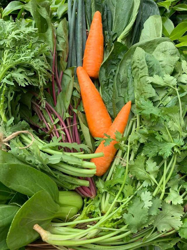 画像: 『農家おススメの旬野菜セット』¥3,000(代引き手数料込み。佐川クール便使用) ※北海道、東北、沖縄、離島は別途送料追加 出荷当日に収穫した新鮮野菜が箱いっぱいに届く。5月下旬から6月にかけては、有機赤くきサラダほうれん草、有機サラダ春菊、有機人参など8品を、島根の三島ファームから直送。旬野菜セットは、下記の問い合わせ先のほか、メール( kyushu0831@gmail.com )、 Facebookページ よりメッセンジャーを利用しての注文も可能 PHOTOGRAPH BY HIROKO ITO