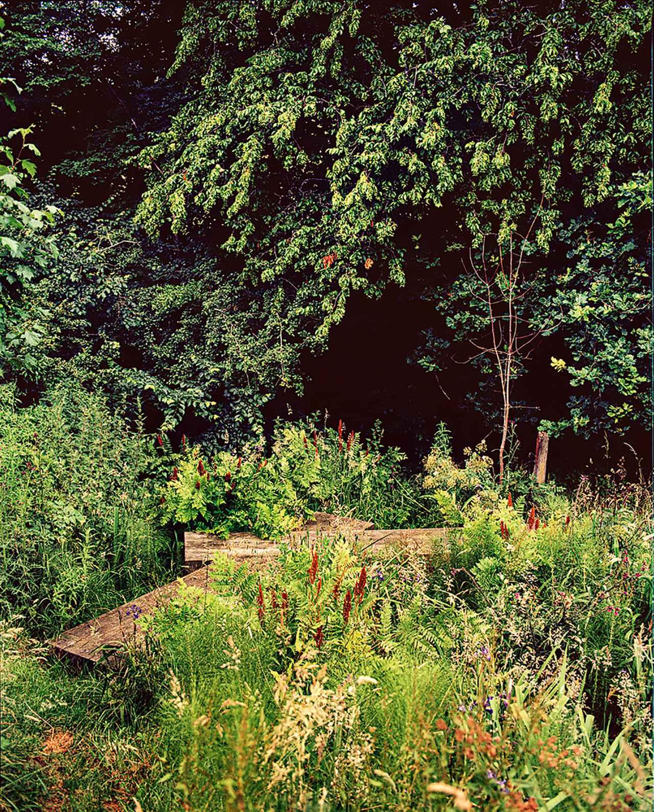 Images : 7番目の画像 - 「野花が咲き乱れ、風に揺れるーー ダン・ピアソンの自身が憩う庭」のアルバム - T JAPAN:The New York Times Style Magazine 公式サイト