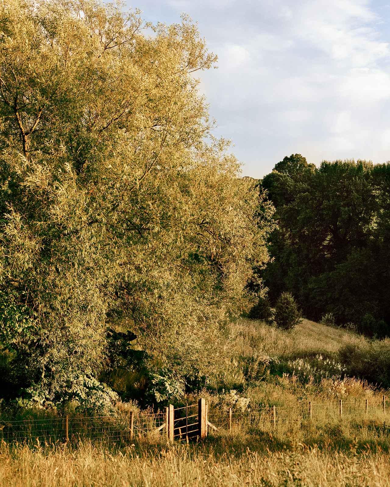 Images : 8番目の画像 - 「野花が咲き乱れ、風に揺れるーー ダン・ピアソンの自身が憩う庭」のアルバム - T JAPAN:The New York Times Style Magazine 公式サイト