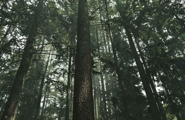 画像1: スキン&マインドケアブランド 「BAUM」が体現する 新たなビューティのかたち