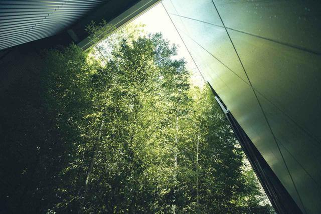 画像: 中庭に植えられている竹の林。ガーデンビューの客室はこの竹林に面している。窓の外の竹林はとても落ち着くとゲストからも好評