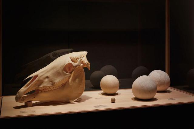 画像: 動物の胃や腸の中に形成される凝固物であるベゾアールや、馬の頭蓋骨なども並ぶ © NACÁSA & PARTNERS INC. / COURTESY OF FONDATION D'ENTREPRISE HERMÈS