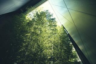 中庭に植えられている竹の林