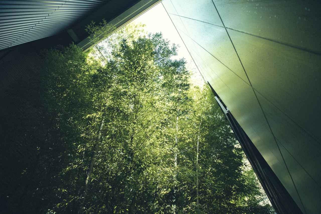 Images : 中庭に植えられている竹の林