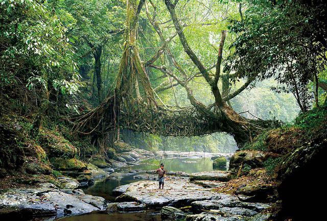 """画像: インドのマウリノン村にあるゴムの木の根でつくられた橋。現代デザインの過ちを省みる今、先住民族と古代建築の伝統が見直される """"LO-TEK, DESIGN BY RADICAL INDIGENISM,""""BY JULIA WATSON, PUBLISHED BY TASCHEN © AMOS CHAPPLE"""