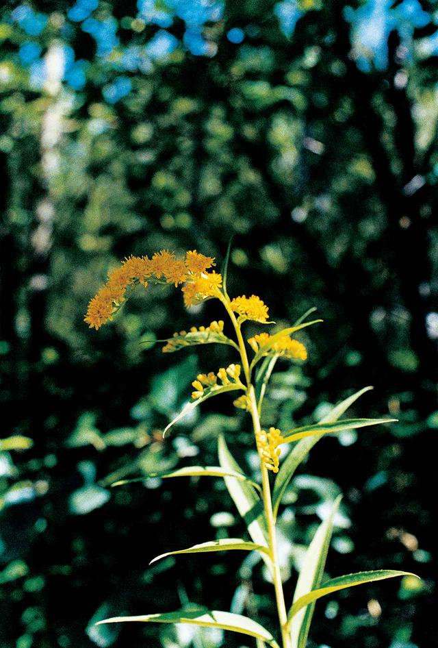 画像: 2007年にスイスに滞在し制作した『SWISS』(赤々舎)より。祖母が生前に撮影した花の写真群を持参し、自らも植物にカメラを向けることで、一人の女性の人生と向き合った作品でもあった © YURIE NAGASHIMA