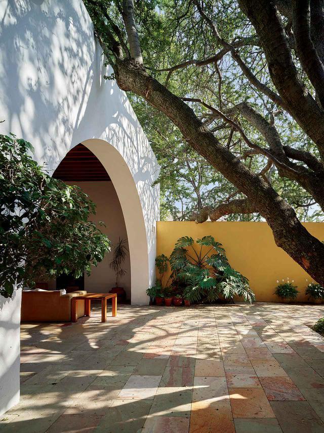 画像: 〈パディーヤ邸〉の中庭の明るい黄色の壁とフィロデンドロンやハマグルマなどの植物