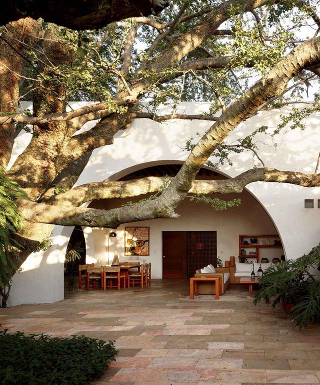 画像: ウーゴ・ゴンザレスが1989年にメキシコのサポパンの町に建てた〈パディーヤ邸〉の、石灰岩を敷いた中庭に植えられているのは、この地方で長年栽培されているグアムチルの木