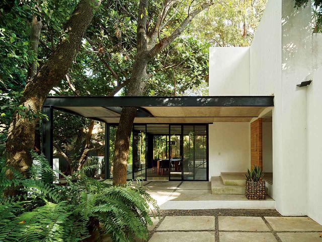 画像: 2011年に改装された〈7つのパティオがある家〉では、アレハンドロ・ゲレーロとアンドレア・ソトが設計した別棟のポルティコ(屋根つきポーチ)をトネリコの木が貫いている