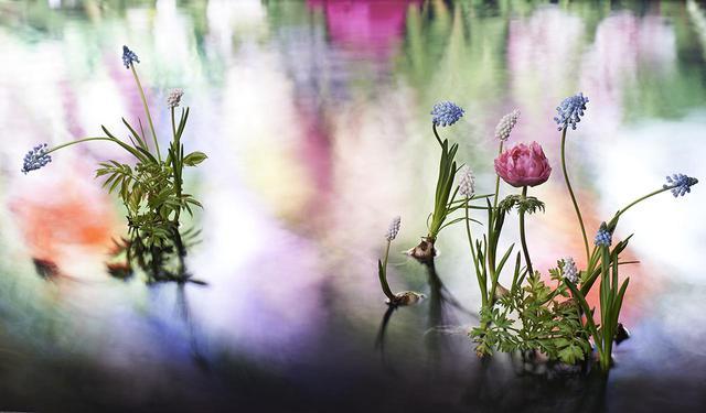 画像: 華道家、片桐功敦のインスタレーション作品。水や光を巧みに操り、水面に幻想的な風景を創り上げる © ATSUNOBUKATAGIRI