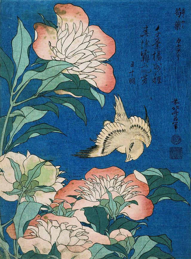 """画像: 葛飾北斎《牡丹とカナリア》(1834年頃) KATSUSHIKA HOKUSAI, """"PEONIES AND CANARY,"""" FROM THE SERIES """"SMALL FLOWERS,"""" CIRCA 1834, WOODBLOCK PRINT, PHOTO:RMN-GRAND PALAIS(MNAAG, PARIS)/THIERRY OLLIVIER/DISTRIBUTED BY AMF"""