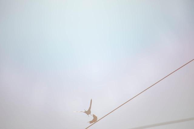 """画像2: 《Untitled》(from the series of """"Under the same sky"""") 2021年"""