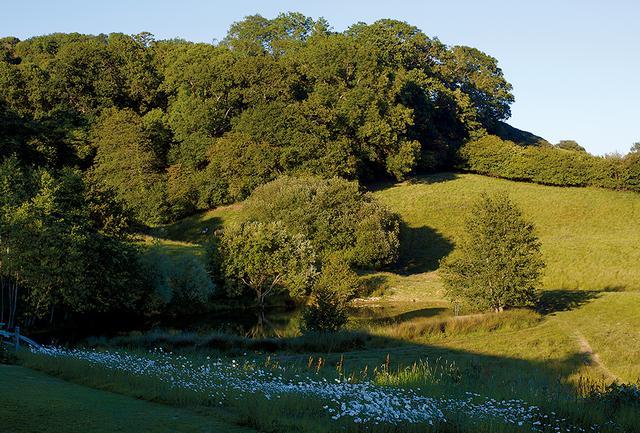 画像: ジャスパーの庭の中で野生の樹木が生い茂るエリア。フランス菊が牧草地の一角を覆うように咲いている