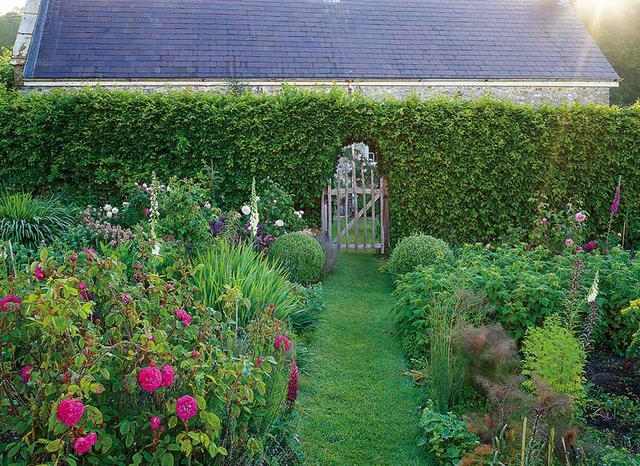 画像: シデの生垣で隠れているコテージは14世紀の建築で、ジャスパーの書斎とオフィスがある。庭にはオールドローズやウイキョウ、立葵、ラズベリーの低木、レディスマントルが植えられている