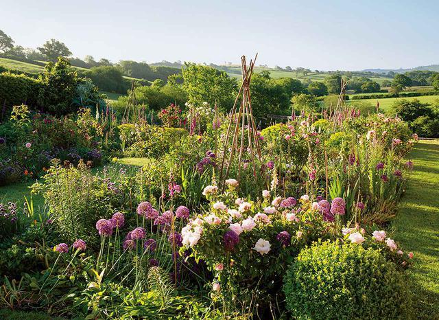 画像: アリウム、ジギタリス、チャイブ、レディスマントル、バラが育つジャスパー・コンランのにぎやかな庭