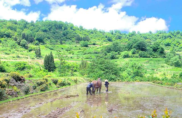 画像: 馬との共同作業は信頼関係そのもの。のちに酒米を植える予定の水田を耕す