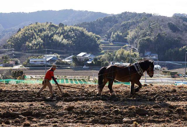 画像: 馬耕の技術の習得には約1~2年間かかる